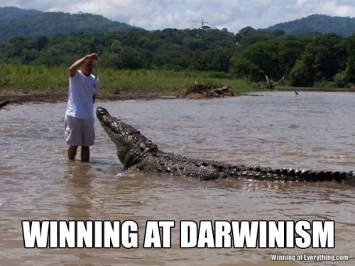 0e00ef6bf82ec Winning at darwinism joke overflow joke archive jpg 500x375 Croc puns