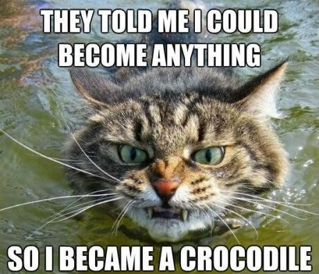 4513624f6ad89 You can be anything you want to be joke overflow joke archive jpg 460x395 Croc  jokes