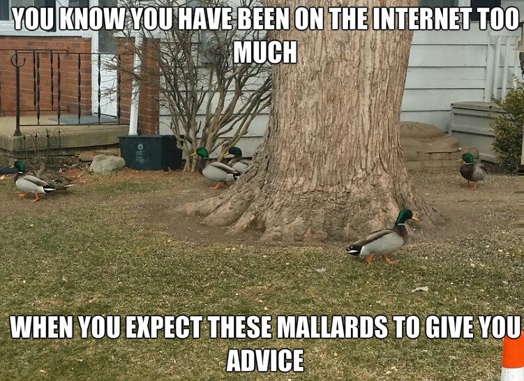 Duck Related Puns